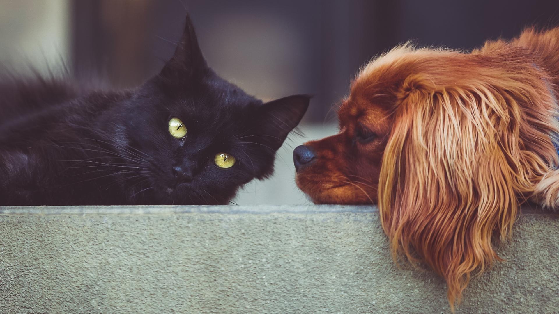 """Webinar """"Manejo del perro y el gato en la clínica"""""""