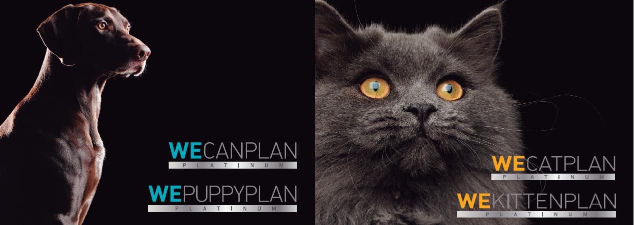 Webinar Weplan Platinum